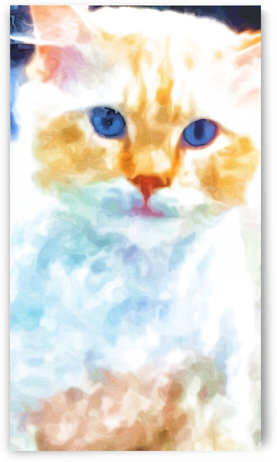 White Cat by Susan C