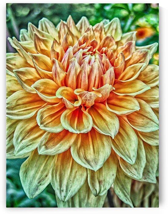 flower ten by Eugene Rosenthal