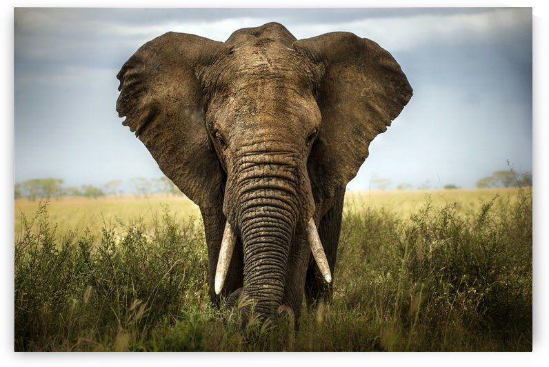 Encounters in Serengeti by 1x