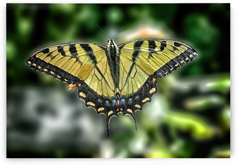 butterfly 3 by Eugene Rosenthal