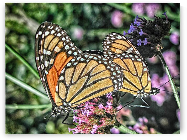 butterfly 4 by Eugene Rosenthal