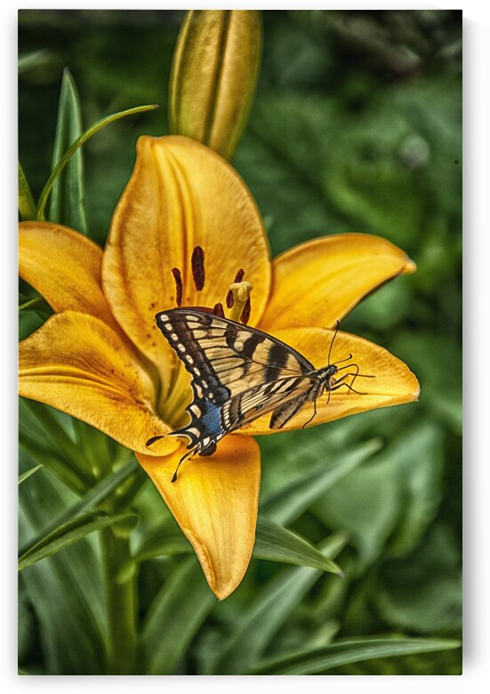 butterfly 5 by Eugene Rosenthal