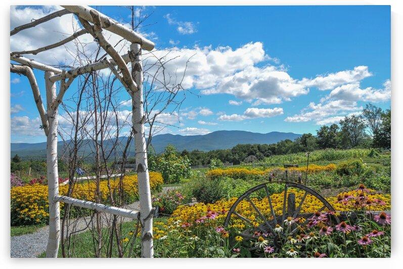 PMV  landscape FLORAL by melanie vachon