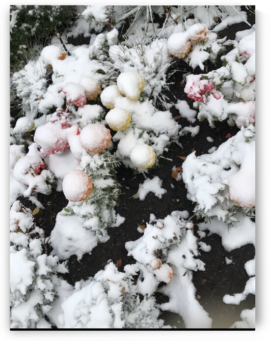 Snow over Flowers by Susan C