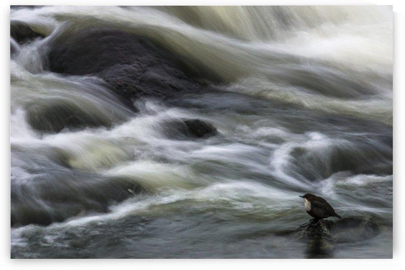 Flowing Contemplation by Arne Östlund  by 1x