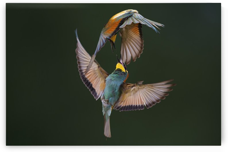 Fight Between Rainbows by Marco Redaelli  by 1x