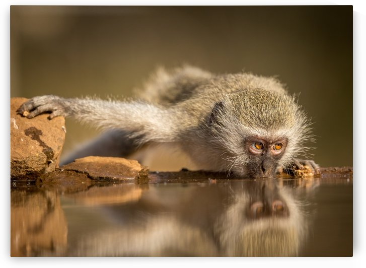 Reflection by Jaco Marx  by 1x