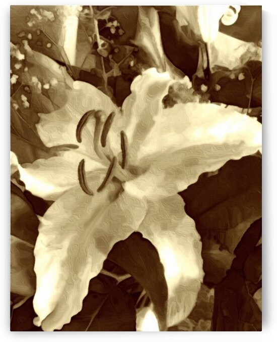 Neutral tone Lily  by Susan C