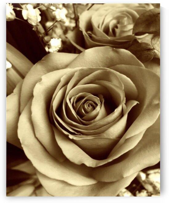 Neutral tone rose  by Susan C