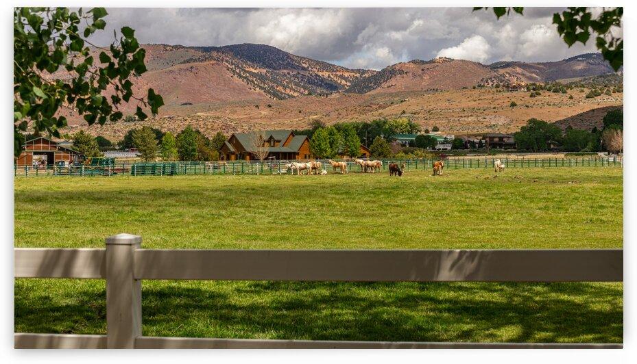 Horse Pasture  by Nicholas