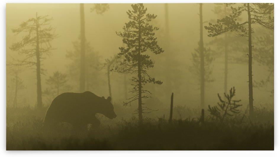 Morning Fog by 1x