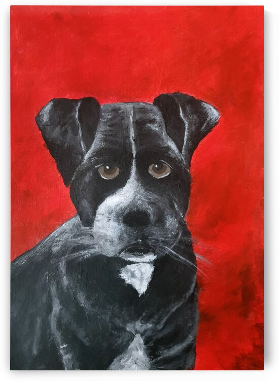 Black dog portrait by Iulia Paun ART Gallery
