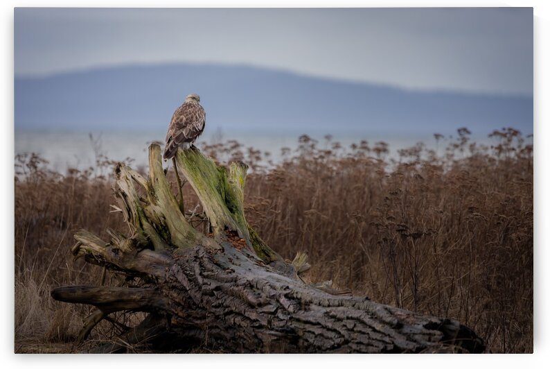 On the Marsh by Pete Nuij Photography