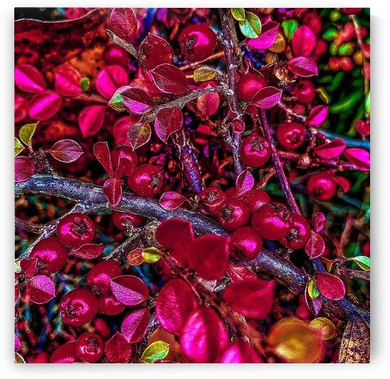 Winter Berries by BotanicalArt ca