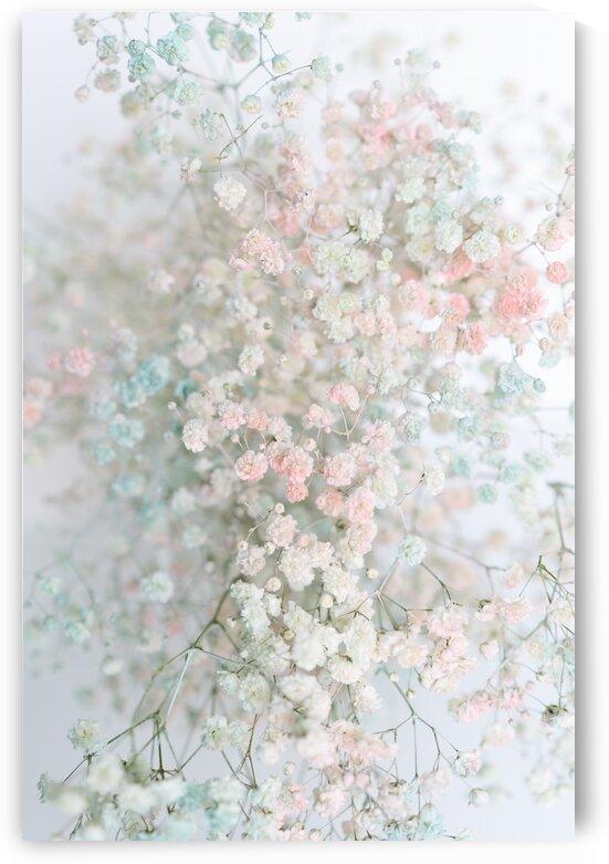 Daltana Pastel Floral Aera by Bri Boros