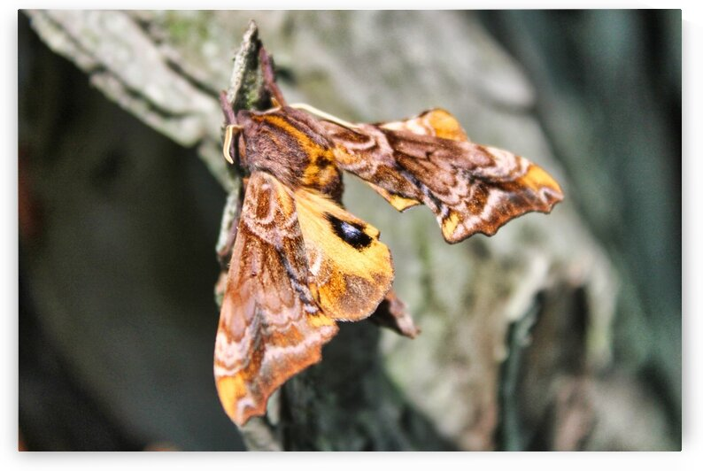 Lovely Moth 3294 by Eric W Reynolds