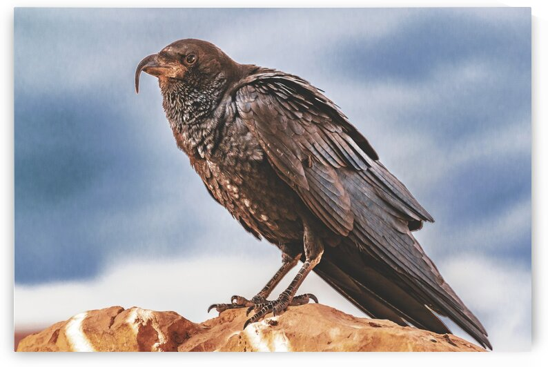 Black Crow Standing at Rock by Daniel Ferreia Leites Ciccarino