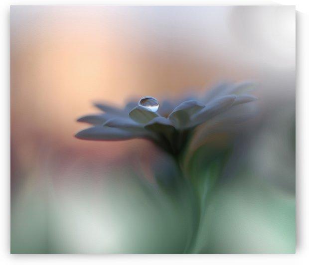 Eyes of the Light by Juliana Nan  by 1x
