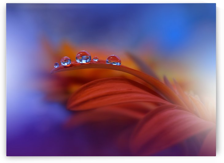 Metamorphosis by Juliana Nan  by 1x