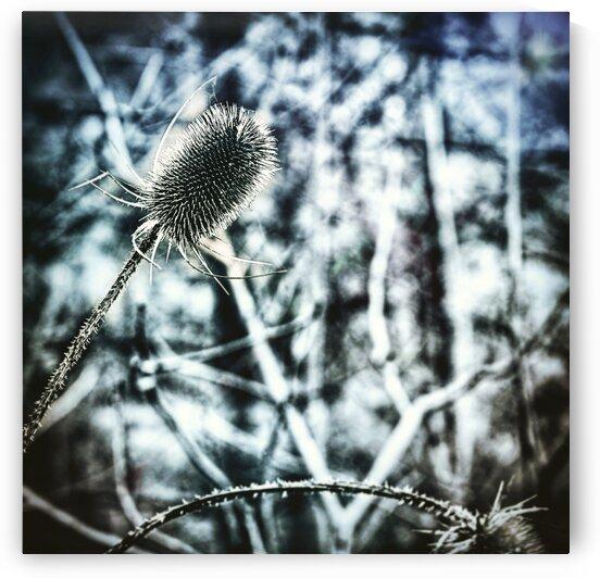 Spiky Flora 2 by Sammi Davis