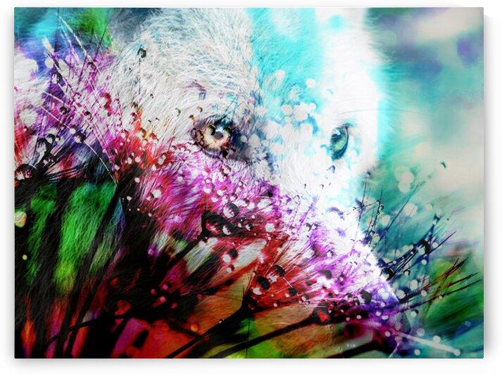 Metamorphose by   Graine de lune   Mahine