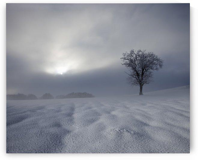 Winter Impression by 1x