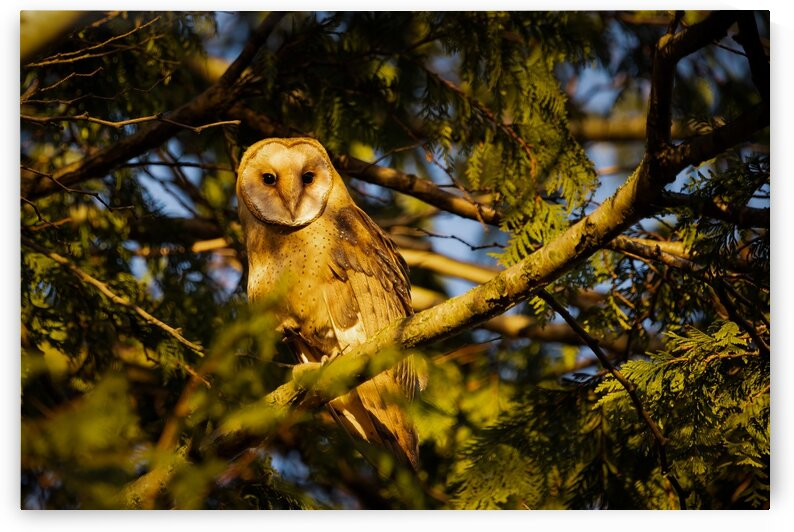 Eyes Wide Open by Pete Nuij Photography