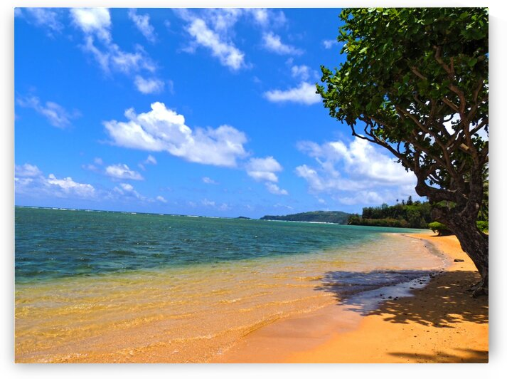 Untamed Kauai 5 of 5 by 1North