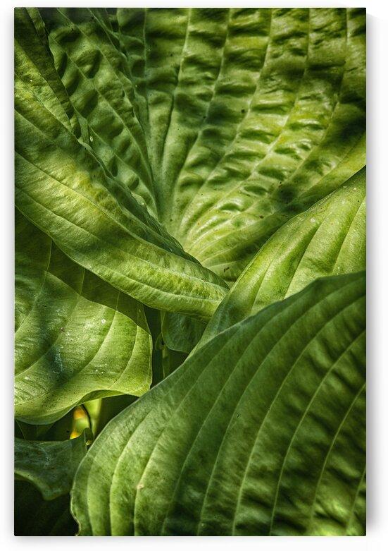 green by Eugene Rosenthal