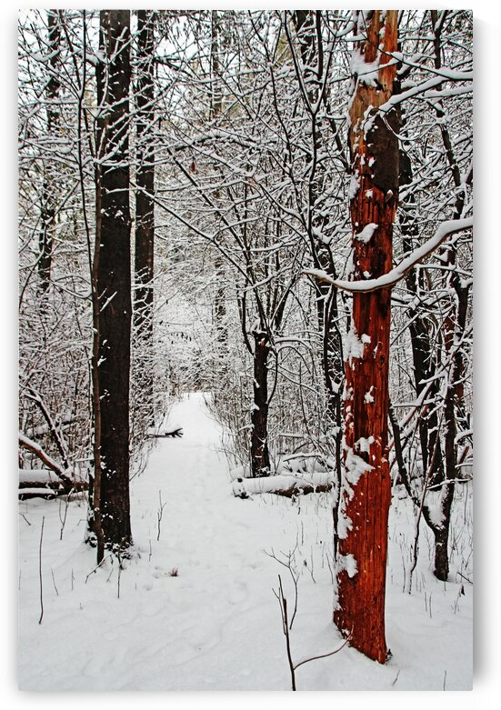 Decked In Snow by Deb Oppermann