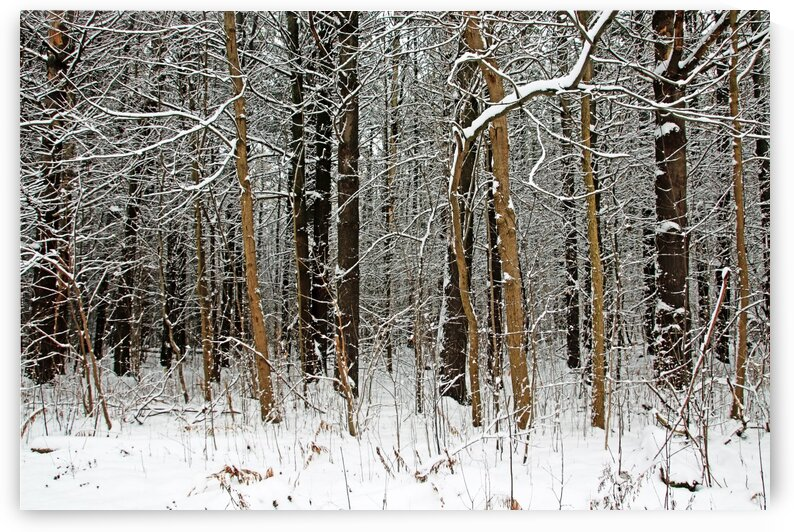The Browns Of Winter by Deb Oppermann