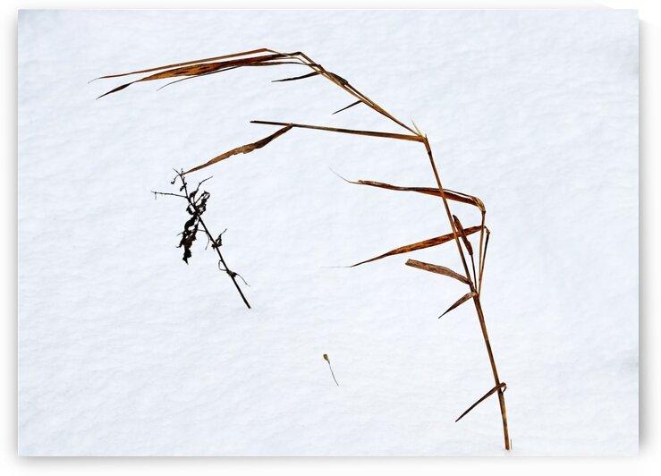 Winter Grass I by Deb Oppermann