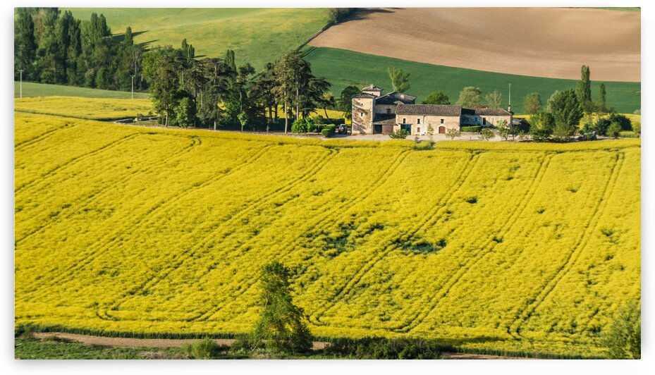 French Canola Field with Farmhouse by bj clayden photography