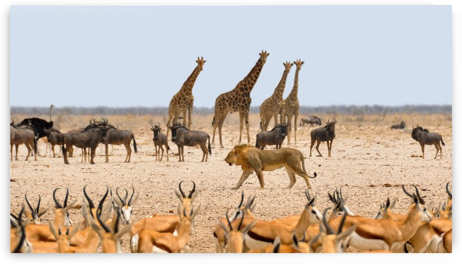 african animals by Lovely and Nicely