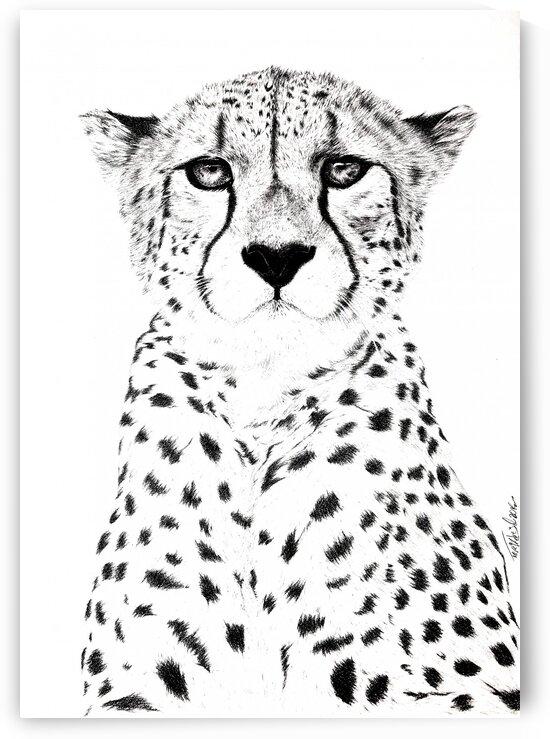 Asiatic cheetah by Tpencilartist