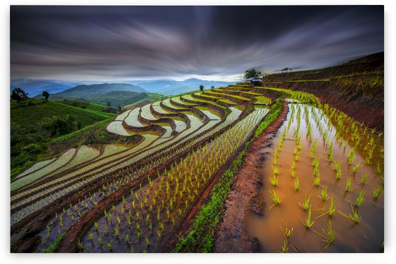 Unseen Rice Field by 1x