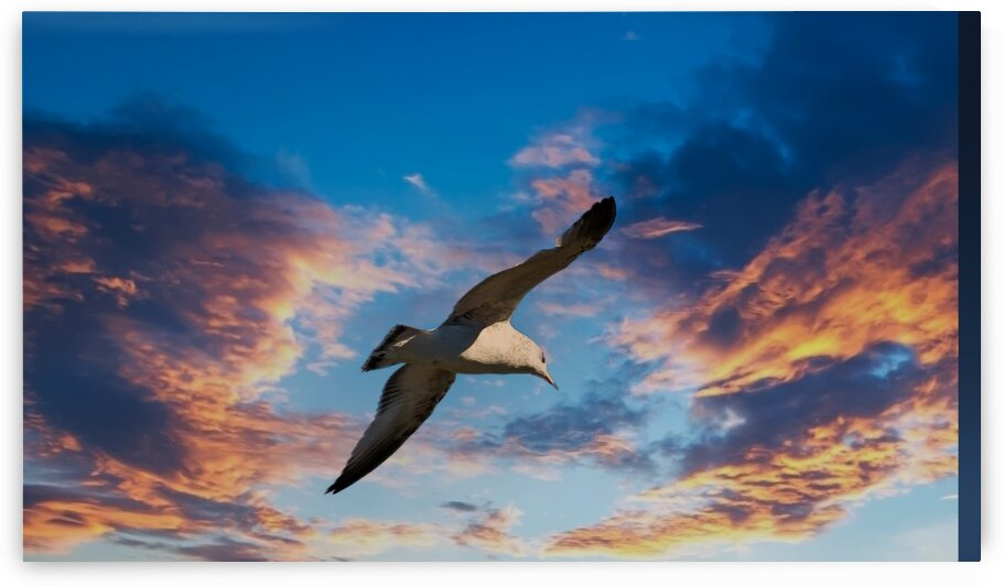 Seagull on Sunset by Darryl Brooks