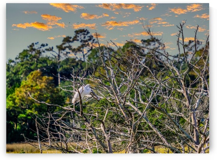 Egret in Tree at Dusk by Darryl Brooks