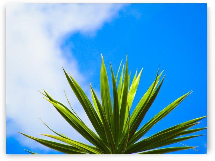 Green Leaf Blue Sky by Shajhan Sheriff