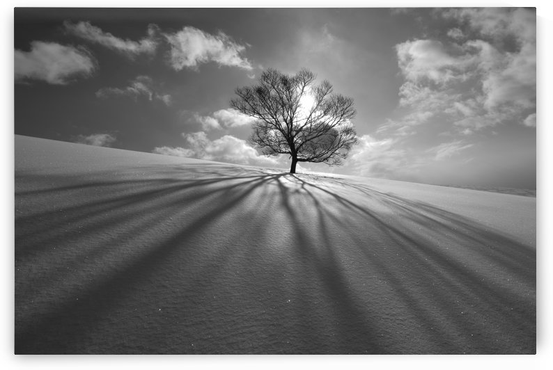 Tree Shadow by 1x