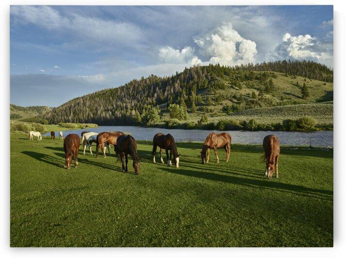 Horses graze in the pasture by Tony Tudor