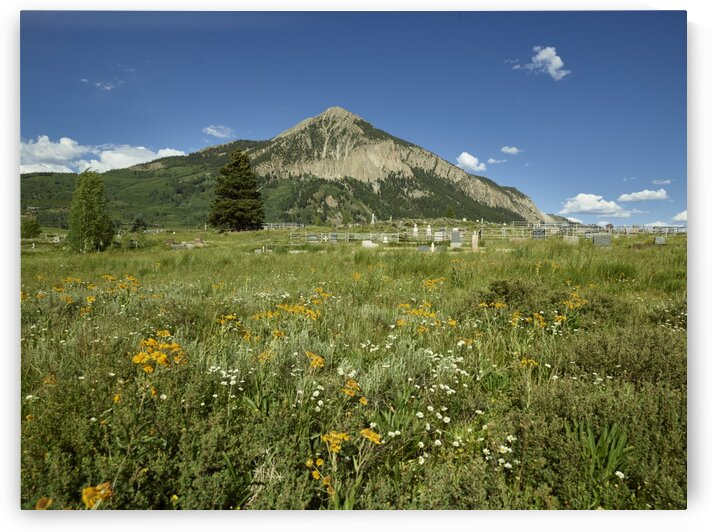 Landscape  including many wildflowers for which the area is famous  around Crested Butte  Colorado. by Tony Tudor