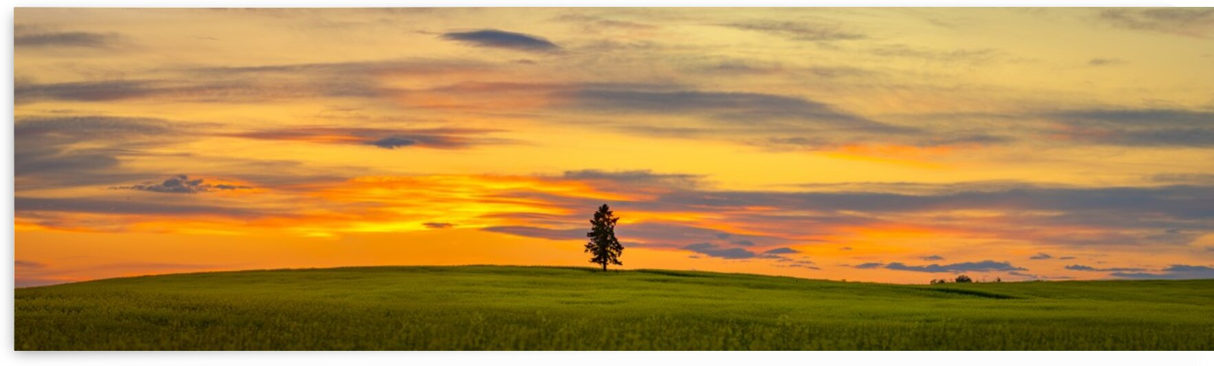Sunset Pano by Andrew OBrien