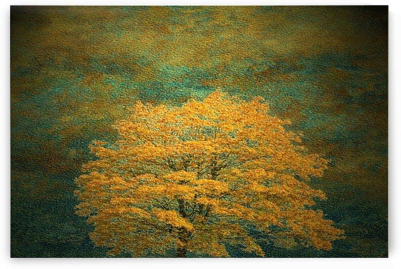 Yellow cherry tree by Bedo Art