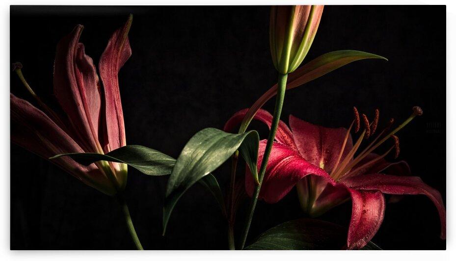 Floraison 2 by Daniel Thibault artiste-photographe