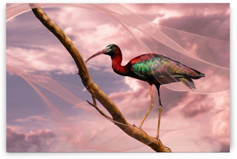 Ibis in a Dream by Al Chemist