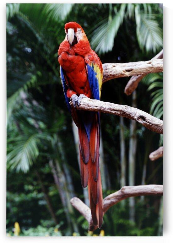 Parrot Jungle by Tony Tudor