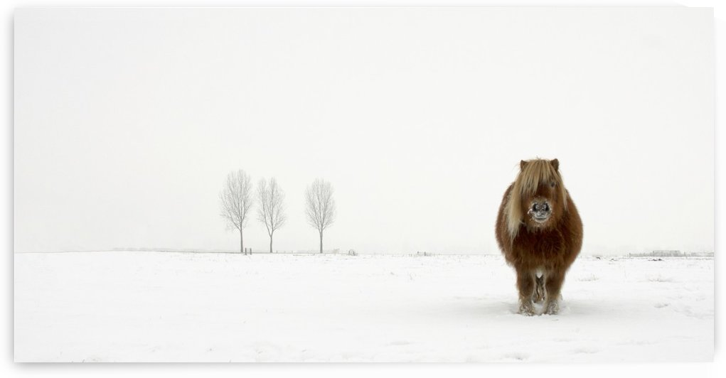 The cold pony by Gert van den by 1x