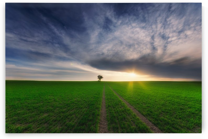 loner in the sun by Piotr Krol (Bax) by 1x