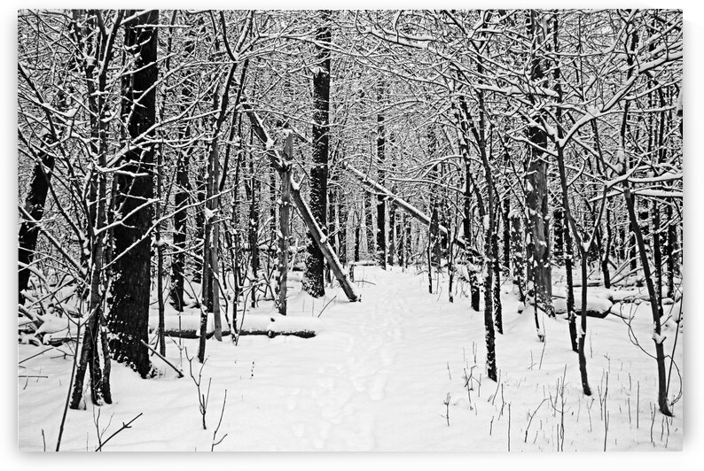 Cold And Crisp Black And White by Deb Oppermann